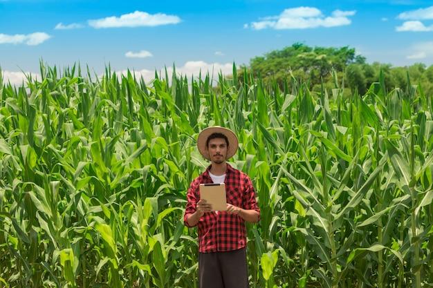 Landwirt, der digitalen tablet-computer in kultivierter maisfeldplantage verwendet