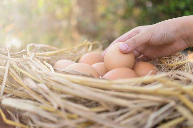 Landwirt, der ein braunes ei und braune eier in einem nest auf hölzernem im hühnerbauernhof, bild mit kopienraum hält.