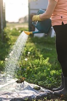 Landwirt, der einen gemüsegarten bei sonnenuntergang gießt,