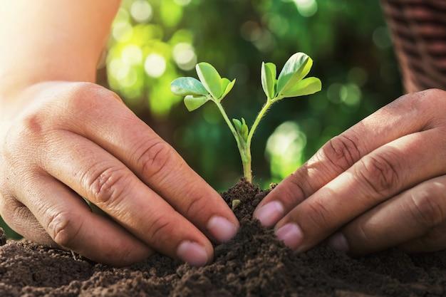 Landwirt, der kleinen baum mit sonnenlicht in der natur pflanzt. landwirtschaftskonzept