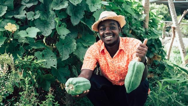 Landwirt, der papaya am bio-bauernhof hält