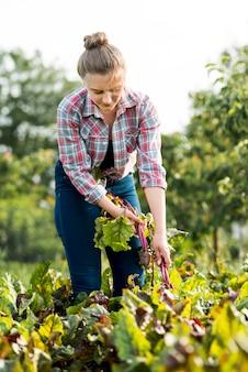 Landwirt, der pflanze vom feld zieht