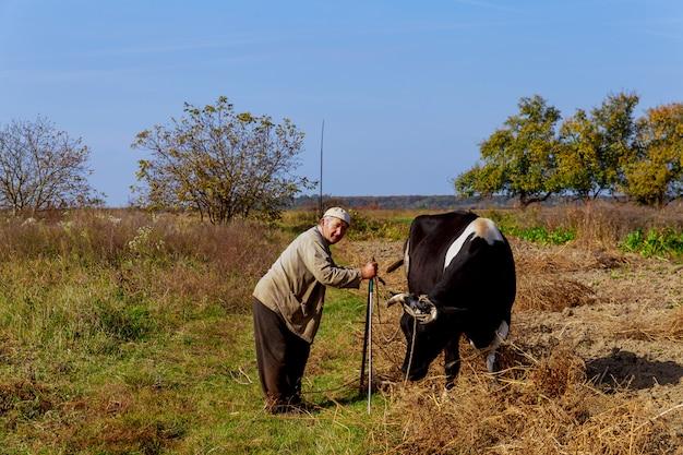 Landwirt, der seine kühe in der landschaft betrachtet