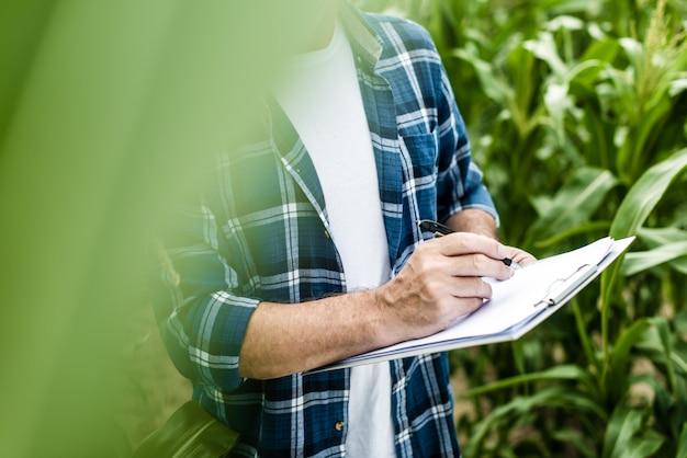 Landwirt, der sonnigen tag des maisfeldsommers kontrolliert