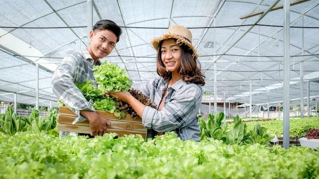 Landwirt erntet gemüse-bio-salat, salat von hydrokultur-farm für kunden.