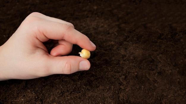 Landwirt hand, der gemüsesamen auf boden im hausgarten sät
