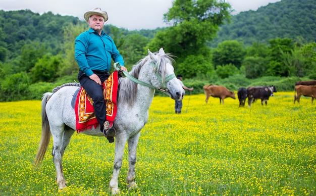 Landwirt im pferd, das um kühe in der plantage sich kümmert