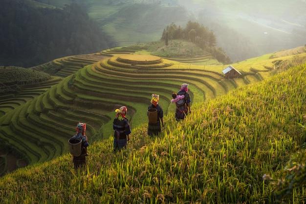 Landwirt in den reisfeldern auf terassenförmig angelegtem in der rainny jahreszeit bei mu cang chai, vietnam.