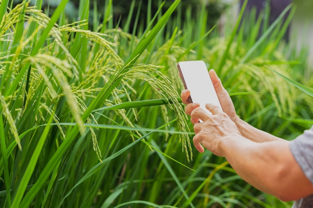 Landwirt ist hand, der smartphone auf natur hält.