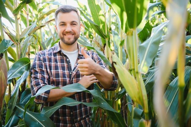 Landwirt kontrolliert maiskulturen