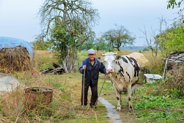 Landwirt mit kühen auf einem grünen feld