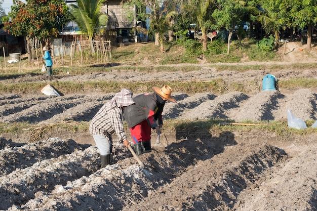 Landwirt mit zwei frauen, der spaten am feld in nakhon phanom, thailand hält