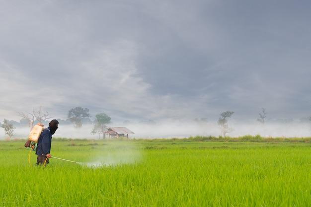 Landwirt sprüht pestizid auf dem reisfeld