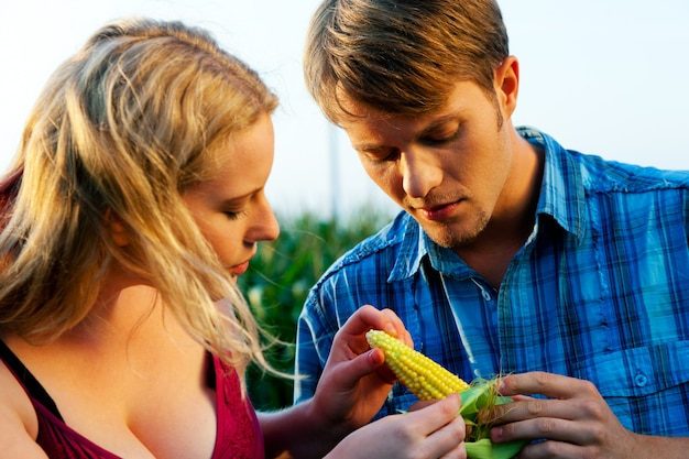 Landwirte, die mais auf ernte überprüfen