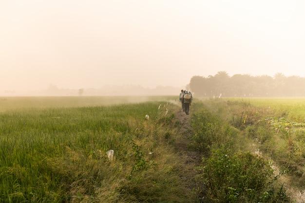 Landwirte, die schädlingsbekämpfungsmittel auf grünem reisfeld während des sonnenaufgangs in supanburi, thailand sprühen.