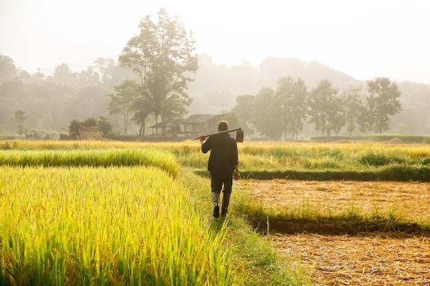 Landwirte, die spaten am feld tragen.