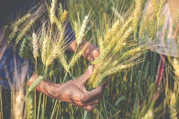 Landwirte ernten glücklich gerste.