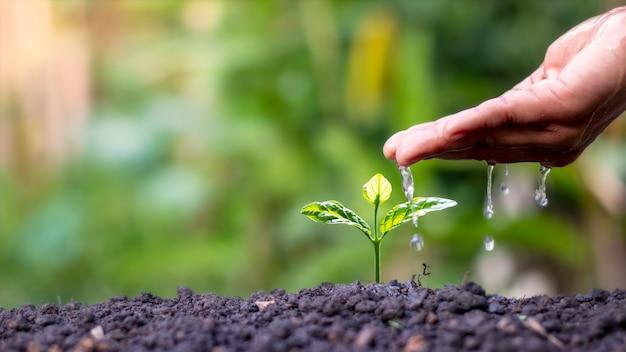 Landwirte gießen kleine pflanzen von hand mit dem konzept des weltumwelttags.