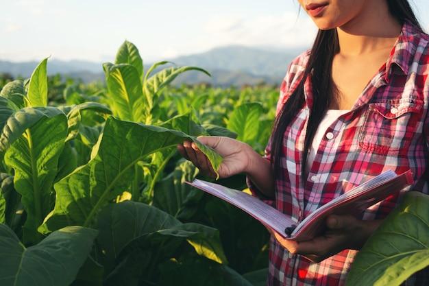 Landwirte halten moderne tabakfelder im notizbuch.