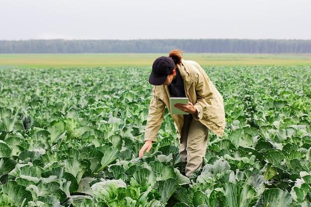 Landwirte kontrollieren die qualität der kohlernte vor der ernte. agronomin mit digitalem tablet und moderner technologie im landwirtschaftlichen bereich