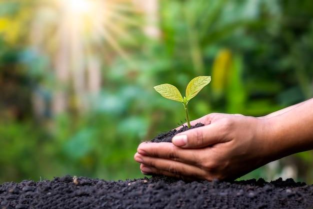 Landwirte pflanzen pflanzen von hand auf dem boden und im weichen sonnenlicht, ideen für die entwicklung der landwirtschaft und wiederaufforstung, um die globale erwärmung zu reduzieren.
