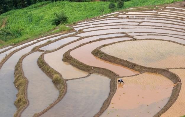 Landwirte pflanzen reis im bauernhof mit dem kopienraum und arbeiten in bergen