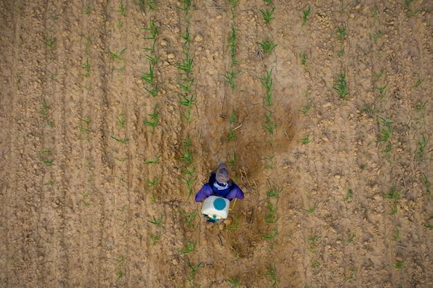 Landwirte spritzen mais auf trockenem land in nordöstlichem thailand ein