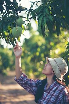 Landwirte überprüfen mangoqualität, junges kluges familienkonzept