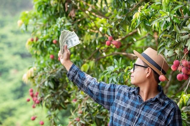 Landwirte zählen die karten für den verkauf von litschis.
