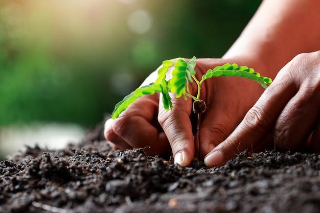 Landwirthand, die sprössling im fruchtbaren boden pflanzt.