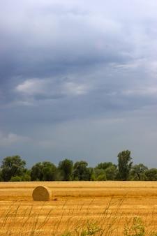 Landwirtschaft bauernhof feld heuhaufen ruhige landschaft erntezeit auf einem landwirtschaftlichen feld in almaty