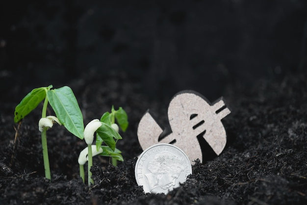 Landwirtschaft, neue pflanze, die aus dem boden mit dollar- und pfundmünzen auf dem boden wächst, spar- und investitionskonzept
