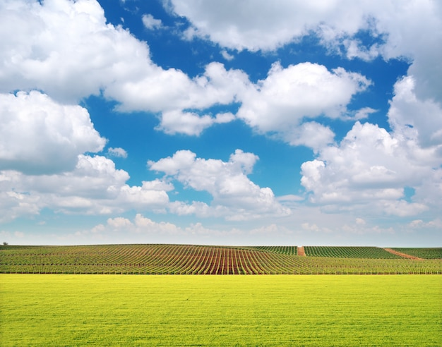 Landwirtschaft und weinbergwiese