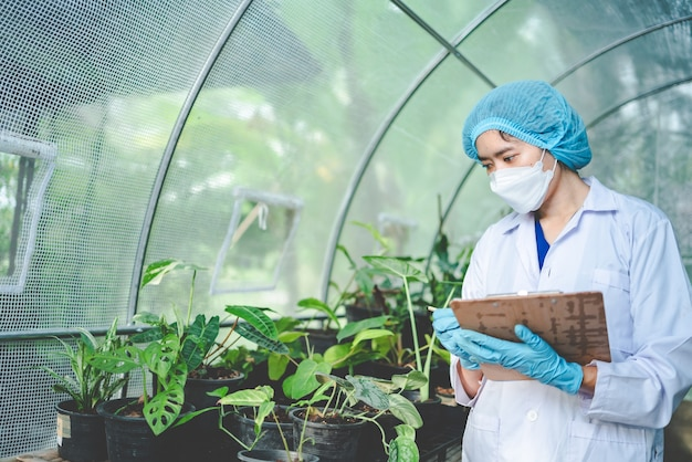 Landwirtschaftliche gartenpflanze im modernen gewächshaus, naturblume im bauernhof, gemüseblattplantage für bio-lebensmittel, botanik-gartenbau-kulturindustrie, samenwachstum mit sonnenlichtumgebung