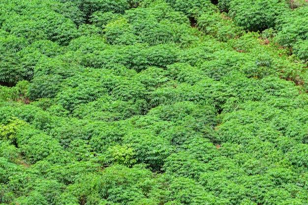 Landwirtschaftliche gebiete in ländlichen gebieten von thailand, longangarten, maniokabauernhof, zuckerrohranbaufarm, ländliche gebiete außerhalb der stadt, luftaufnahme