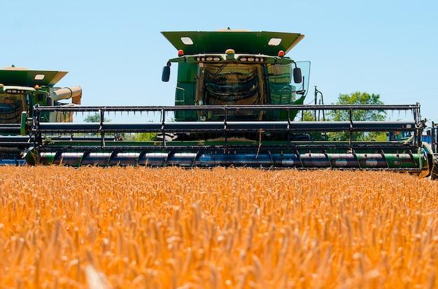 Landwirtschaftliche maschinerie sammelt gelbe weizenernte auf dem offenen gebiet an einem sonnigen hellen tag