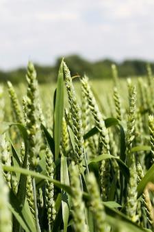Landwirtschaftlicher bereich