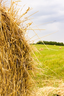 Landwirtschaftlicher landwirtschaftlicher hintergrund mit heu auf wiese.