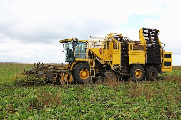Landwirtschaftliches fahrzeug, das zuckerrüben erntet