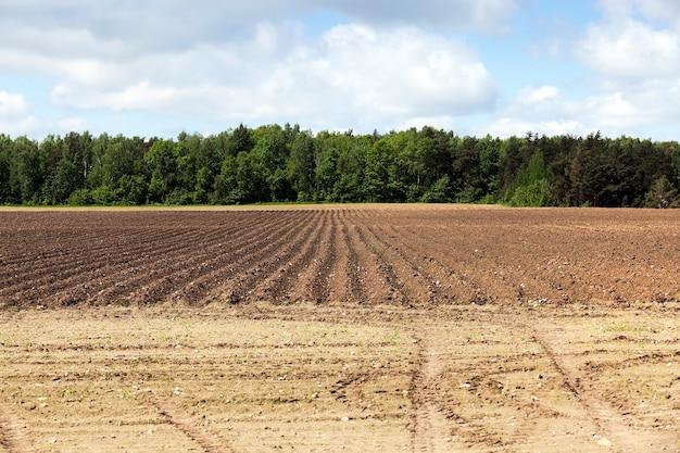 Landwirtschaftliches feld, auf dem furchen gepflügt wurden, um kartoffeln anzupflanzen. frühling. blauer himmel