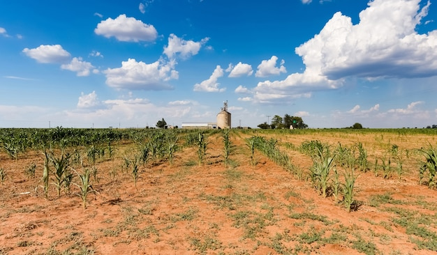 Landwirtschaftliches feld auf dem hintergrund des blauen himmels mit wolken