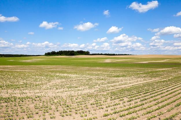 Landwirtschaftliches feld, auf dem pflanzen angebaut werden sollen