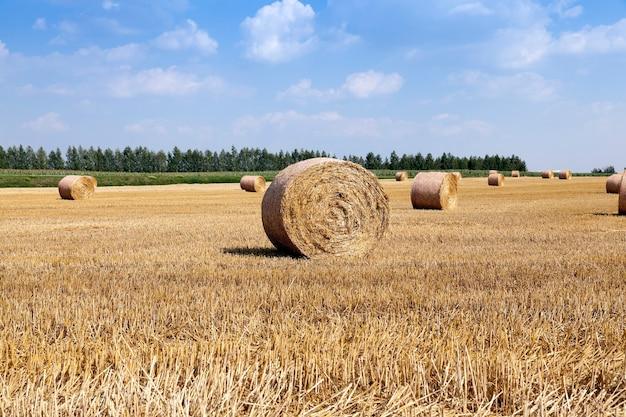 Landwirtschaftliches feld, auf dem sich das stroh nach der ernte zu ballen häufte