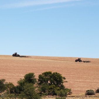 Landwirtschaftliches feld bedeckt im gras unter einem blauen himmel