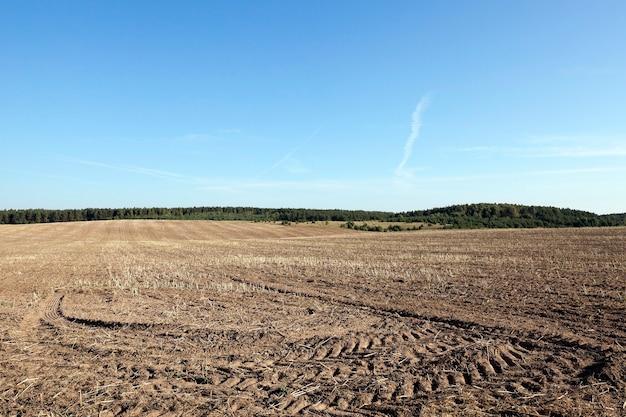 Landwirtschaftliches feld, getreide - landwirtschaftliches feld, das kochen wird und über andere optionen, dh selbst schaden anrichten