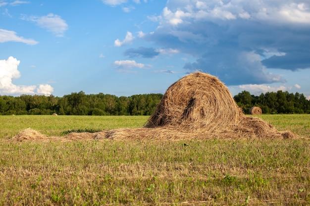 Landwirtschaftliches feld mit geerntetem heu und stapeln im sommer. heuhaufen. ernte von heu und stroh zur tierfütterung