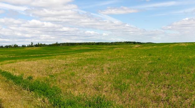 Landwirtschaftliches feld mit grünem gras