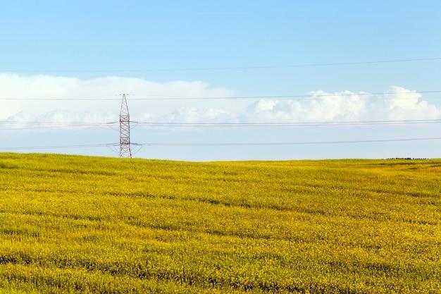 Landwirtschaftliches feld mit rapsblumen und metallhochspannungsdrähten auf eisenstangen