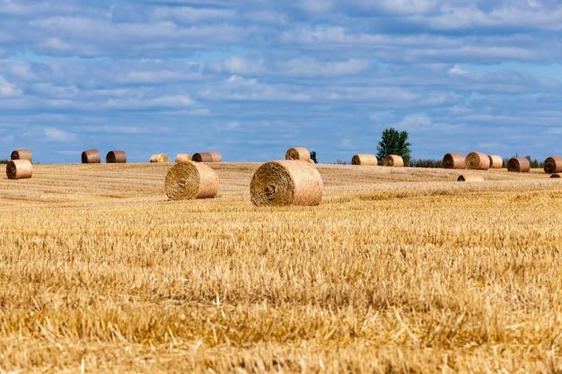 Landwirtschaftliches feld mit strohstapeln