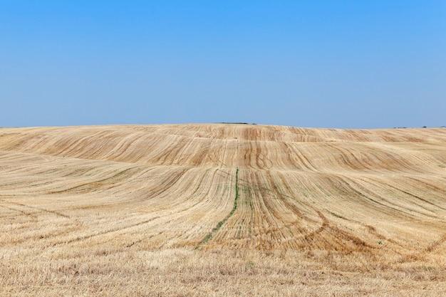Landwirtschaftliches feld, wo auf der erde nach der ernte auf dem weizenstroh verblieb